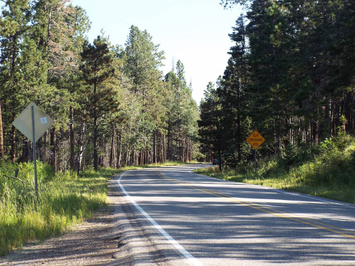 Pine tree lined mountain road through somewhere near Los Alamos New Mexico