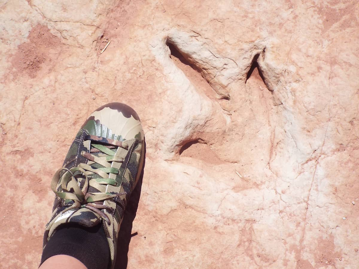 Adidas Superstars and a dinosaur foot print - Perfect